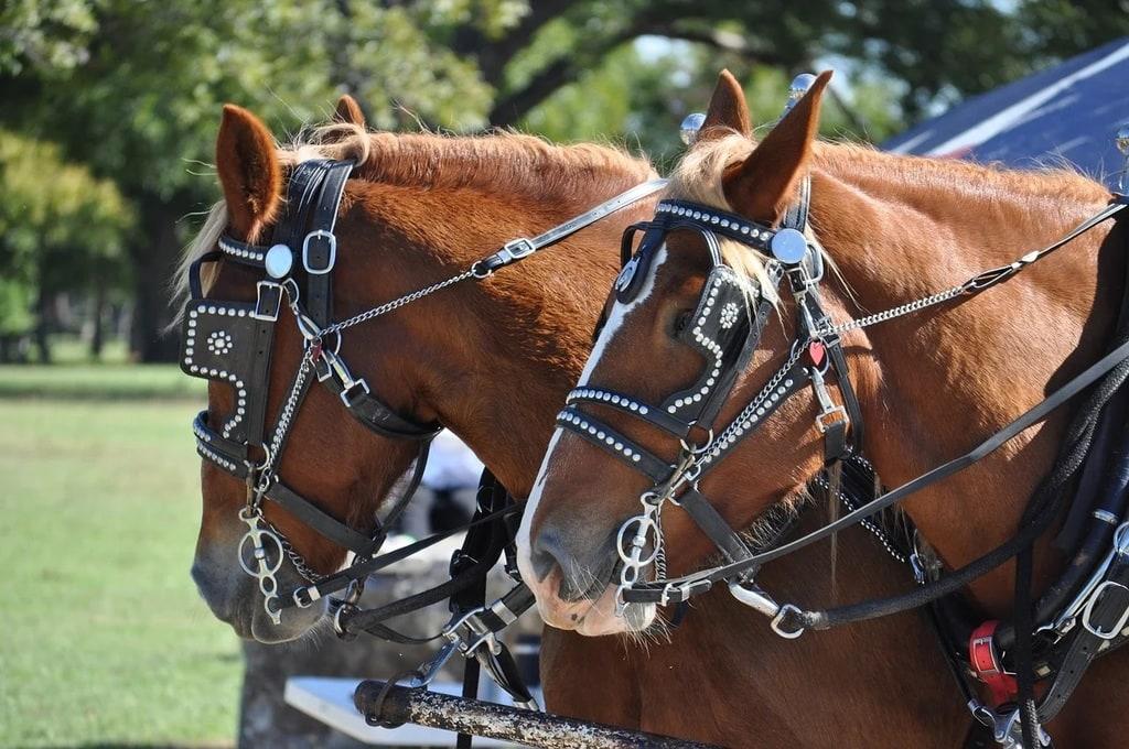 Les assurances cheval : comment choisir la bonne ?
