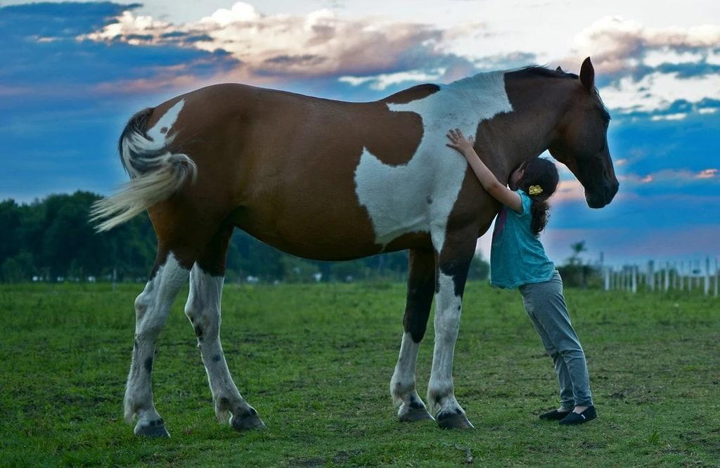 Le pansage du cheval : un moment privilégié entre le cavalier et sa monture