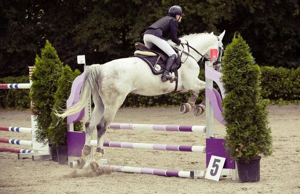 Découvrez le CSO : concours de saut d'obstacle à cheval